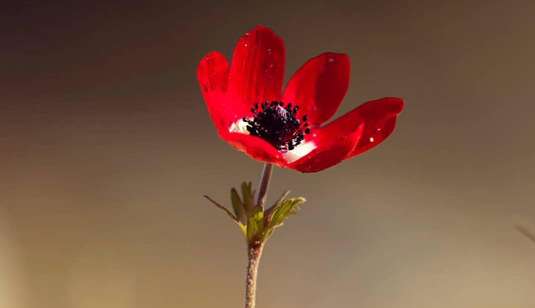 lule.jpg
