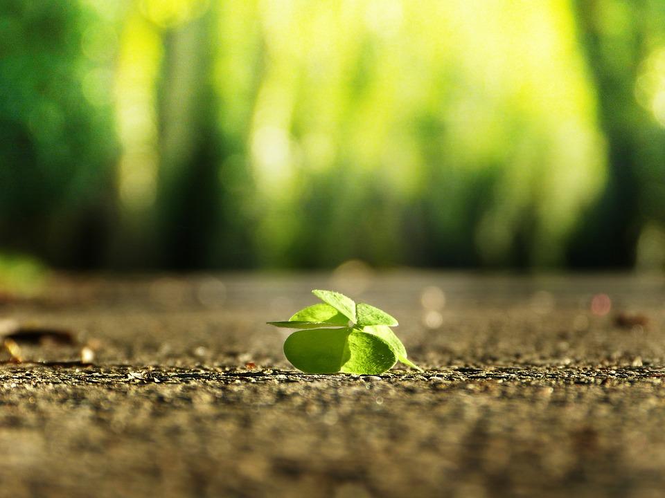 four-leaf-clover-3336774_960_720.jpg