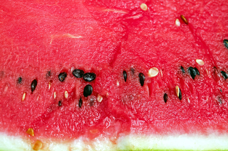 melon-1499393.jpg