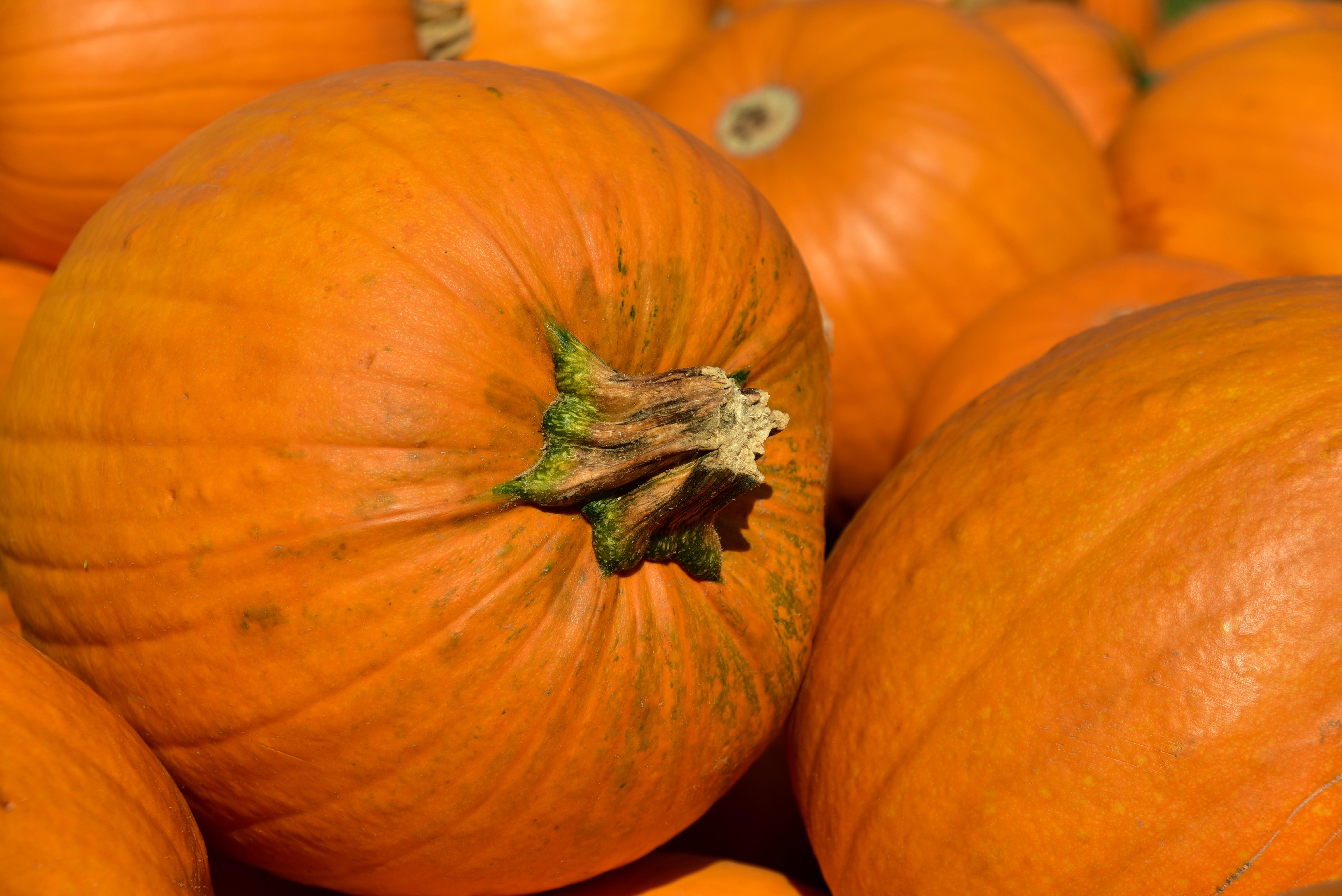 pumpkin-3636243.jpg