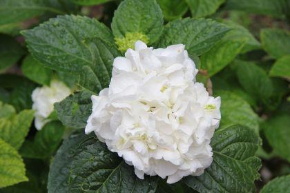 flower-5056746.jpg